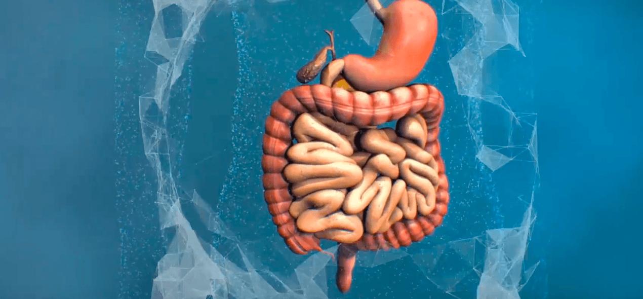Gastro Peristalsis